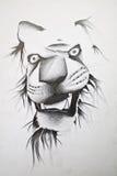 Croquis de lion Photos libres de droits