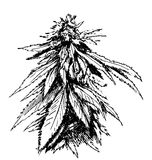 Croquis de main de marijuana Image stock