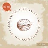 Croquis de noix tiré par la main Eco et nourriture superbe sur le fond de vintage Photos stock
