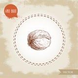 Croquis de noix tiré par la main Eco et nourriture superbe sur le fond de vintage Image stock