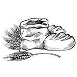 Croquis de nourriture et griffonnage tirés par la main de pain Images libres de droits