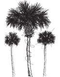 Croquis de palmier Image stock