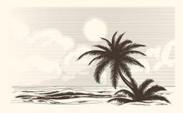 Croquis de palmier de vintage Image stock
