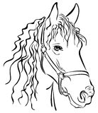 Croquis de plan rapproché de cheval Photos libres de droits