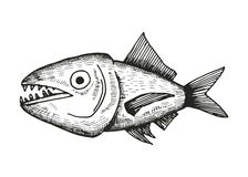 Croquis de poissons illustration stock