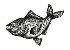 Croquis noir et blanc de truite arc en ciel illustration - Croquis poisson ...