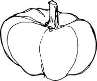 Croquis de potiron mûr sur le fond blanc illustration stock