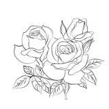 Croquis de Rose sur le fond blanc Image stock