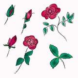 Croquis de roses Photographie stock libre de droits
