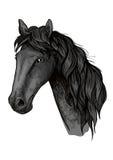 Croquis de tête de cheval d'étalon Arabe noir Photos stock
