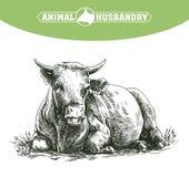 Croquis de vache dessiné à la main bétail bétail pâturage animal Image stock