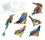 Croquis de vecteur d'oiseau, ensemble Image libre de droits