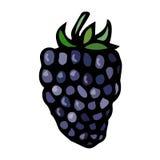 Croquis de vecteur de style de griffonnage de Blackberry, d'isolement sur le fond blanc Photographie stock