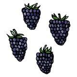 Croquis de vecteur de style de griffonnage de Blackberry, d'isolement sur le fond blanc Image stock