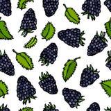 Croquis de vecteur de style de griffonnage de Blackberry sans couture et de feuilles en bon état, d'isolement sur le fond blanc Photos stock
