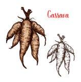 Croquis de vecteur de manioc de tubercule de plante tropicale illustration libre de droits