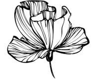 Croquis des bourgeon floraux sur un fond blanc Photos stock