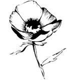 Croquis des bourgeon floraux sur un fond blanc Photo stock