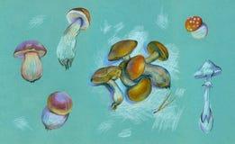 Croquis des champignons Images libres de droits