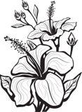 Croquis des fleurs de ketmie Images libres de droits