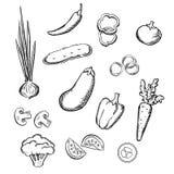 Croquis des légumes entiers et découpés en tranches frais Image libre de droits