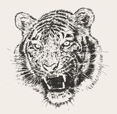 Croquis dessiné par Tiger Head Engraving Vector Hand Photo libre de droits