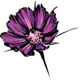 Croquis lumineux de fleur sauvage pourprée Photographie stock libre de droits