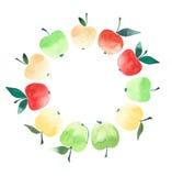 Croquis mûr lumineux de main d'aquarelle de cercle de pomme Photographie stock libre de droits