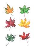 Croquis magnifique de main d'aquarelle de feuille d'érable quatre Image stock