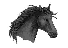 Croquis noir de cheval d'équitation d'étalon Arabe Images libres de droits