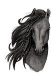 Croquis noir de tête de cheval de jument Photographie stock