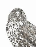 Croquis numérique de portrait de faucon de Galapagos Image libre de droits