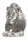 Croquis numérique de portrait de lion d'Arican Photographie stock libre de droits