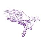 Croquis réaliste volant de llustration de vecteur de colombe Image stock