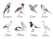 Croquis réglé par oiseaux Ramassage d'oiseaux Photo stock