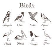Croquis réglé par oiseaux Ramassage d'oiseaux Photos libres de droits