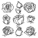 Croquis Rose Flower Set Fleurs de croquis de crayon avec des feuilles sur la tige Image libre de droits