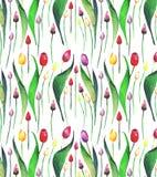 Croquis sans couture de main d'aquarelle de modèle de belle tulipe de ressort Image stock