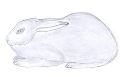 Croquis se reposant de lapin Image stock