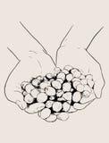 Croquis tiré par la main beaucoup de cerises rouges de café dans les mains, vecteur Image stock