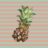 Croquis tiré par la main d'ananas de vecteur Illustration tropicale de nourriture de vecteur d'aquarelle Photographie stock
