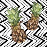 Croquis tiré par la main d'ananas de vecteur Illustration tropicale de nourriture de vecteur d'aquarelle Fond géométrique Photographie stock libre de droits