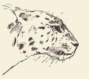 Croquis tiré par la main d'illustration principale de style de léopard Photographie stock
