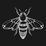 Croquis tiré par la main de gravure d'abeille Illustration de vecteur pour des fripes Images stock