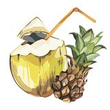Croquis tiré par la main de noix de coco de vecteur avec le fruit d'ananas Illustration tropicale de nourriture de vecteur d'aqua Photos stock