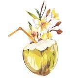 Croquis tiré par la main de noix de coco de vecteur avec des fleurs de plumeria Illustration tropicale de nourriture de vecteur d Photos libres de droits