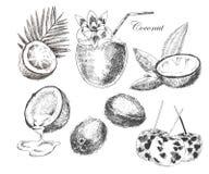 Croquis tiré par la main de noix de coco de vecteur avec la palmette illustration détaillée d'encre et de crayon de style de vint Image stock