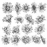 Croquis tiré par la main des fleurs Croquis de tournesol Image libre de droits