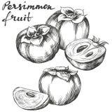 Croquis tiré par la main réglé d'illustration de vecteur de kaki de fruit Photo stock
