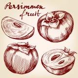 Croquis tiré par la main réglé d'illustration de vecteur de kaki de fruit Photographie stock